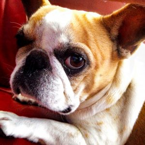 Dierenambulance Hond Elvira
